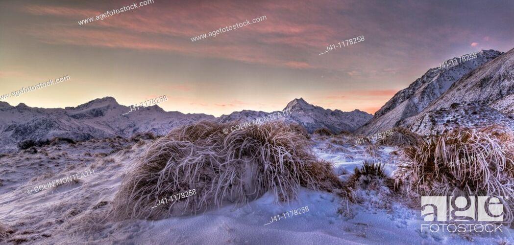 Stock Photo: Frosted tussock grass, Mt Sefton to Aoraki / Mt Cook, dusk, Burnett Mountains.