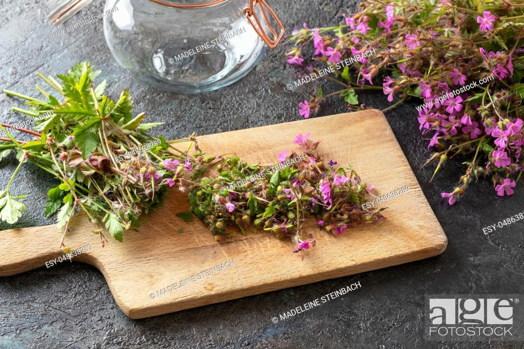 Imagen: Cut-up herb-Robert, or Geranium robertianum plant - ingredient to prepare homemade herbal tincture.