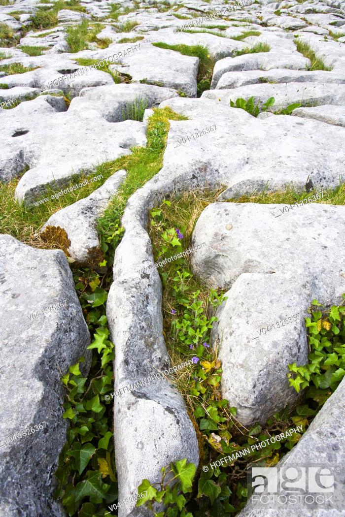 Stock Photo: Detail of the karst landscape of the Burren, County Clare, Ireland, Europe.