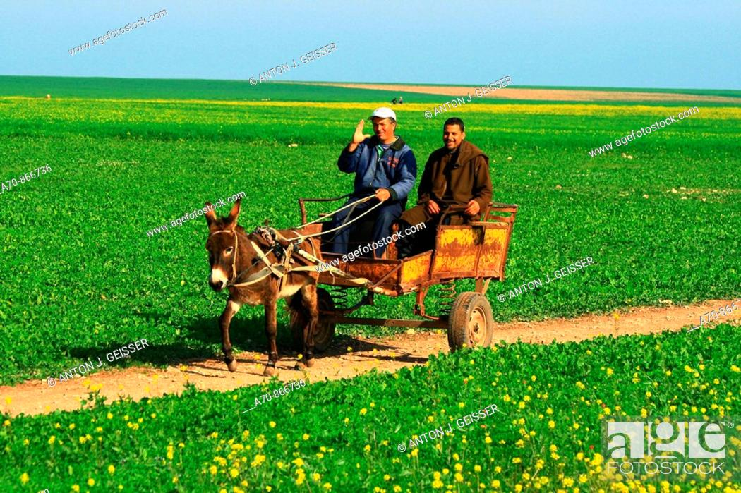 Stock Photo: Landscape with Agadir Morocco Maenner on the way me cars and donkey.