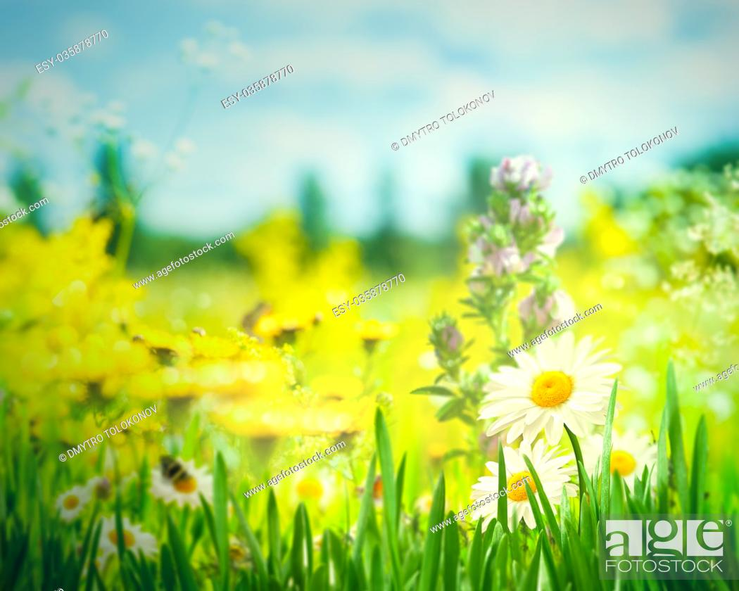 Stock Photo: Summer landscape with wild flowers and lush foliage on the meadow.