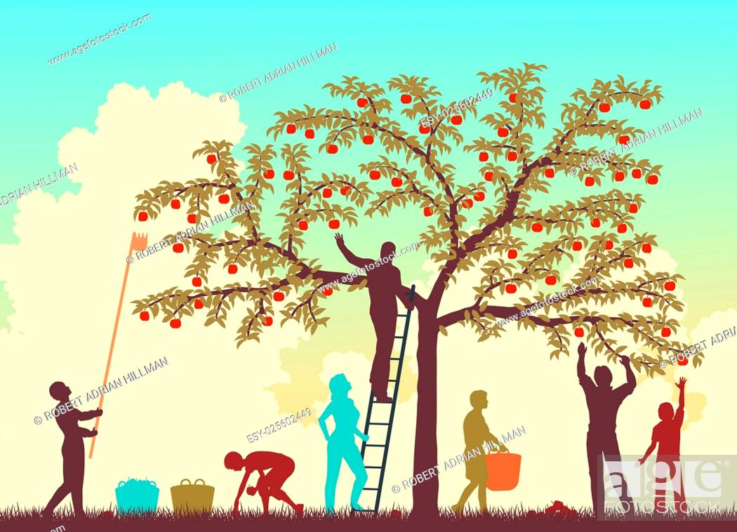 Vector: Editable vector colorful illustration of a family harvesting apples from a tree.