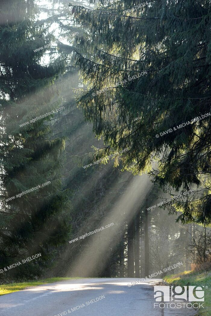 Stock Photo: Street through a forest, Upper Palatinate, Bavaria, Germany, Europe.