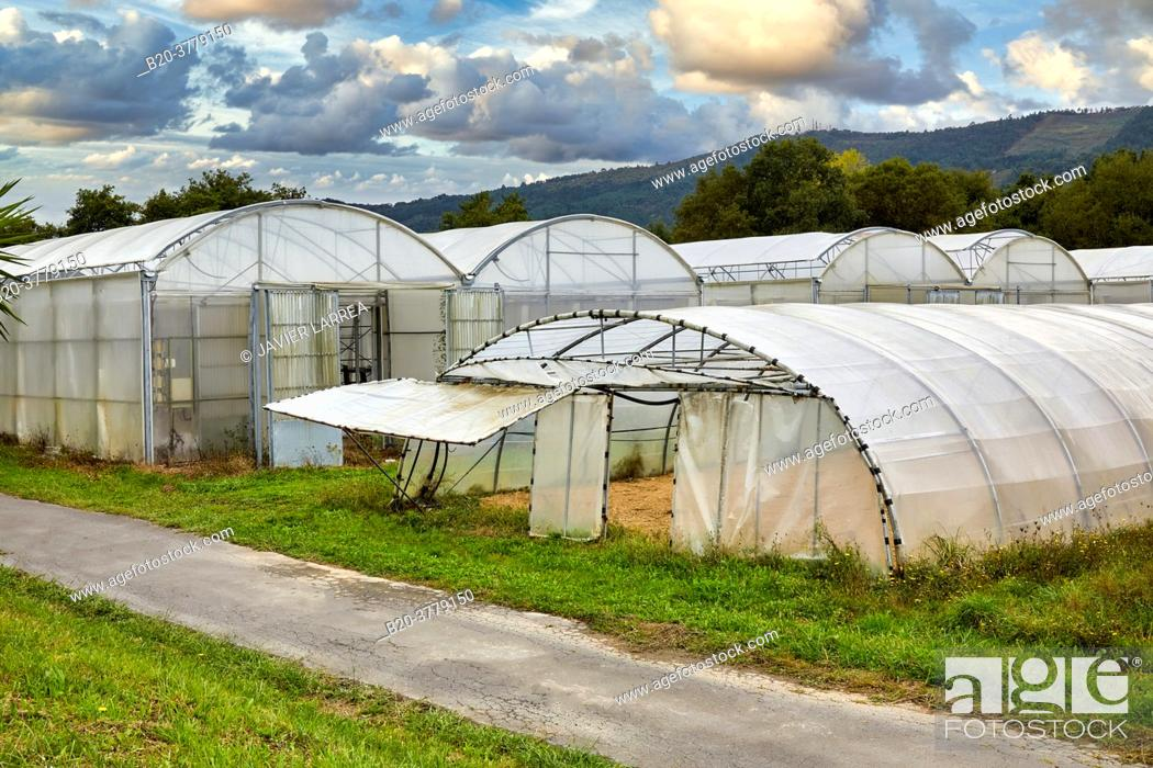 Stock Photo: Greenhouse, Institute for Agricultural Research and Development and the Natural Environment, Basque Country, Spain, Europe.