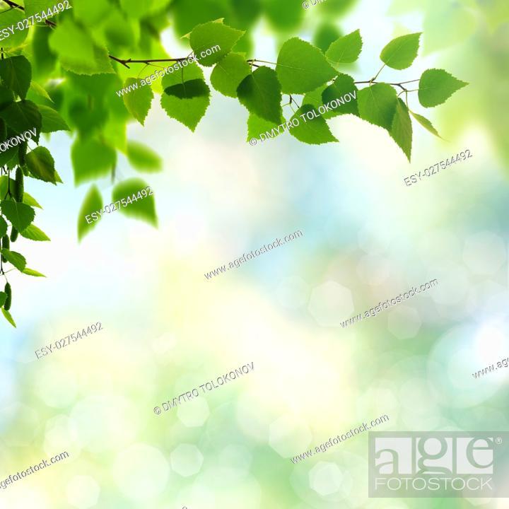 Stock Photo: Summer garden, beauty seasonal backgrounds with beech tree and shiny bokeh.
