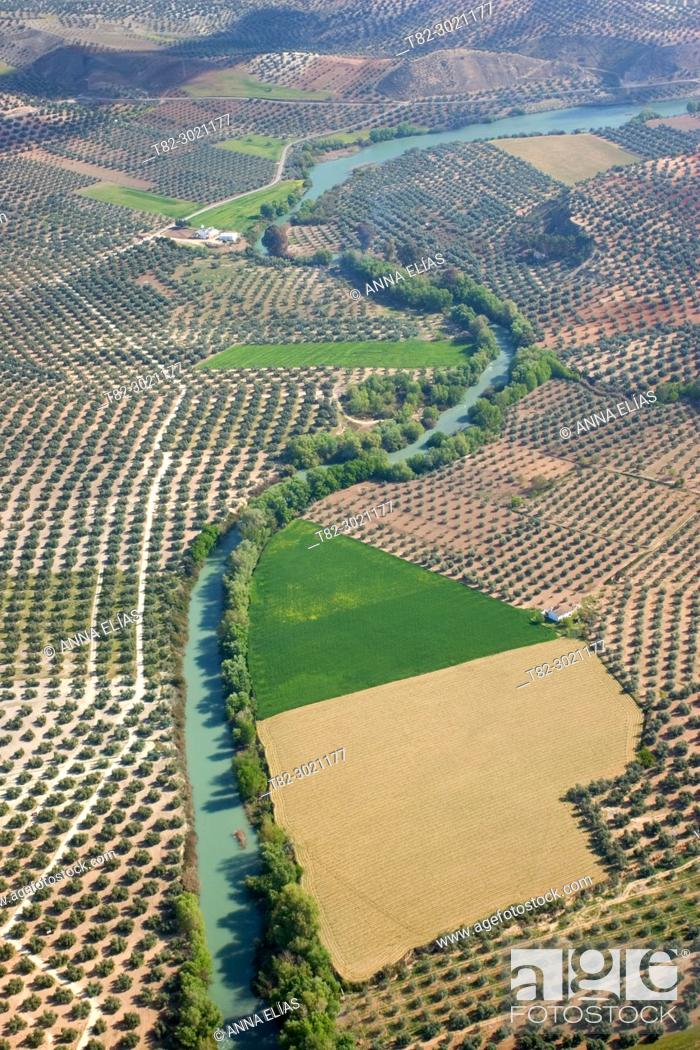 Stock Photo: aerial view olive fields and Genil river Andalucia, Spain Europe.