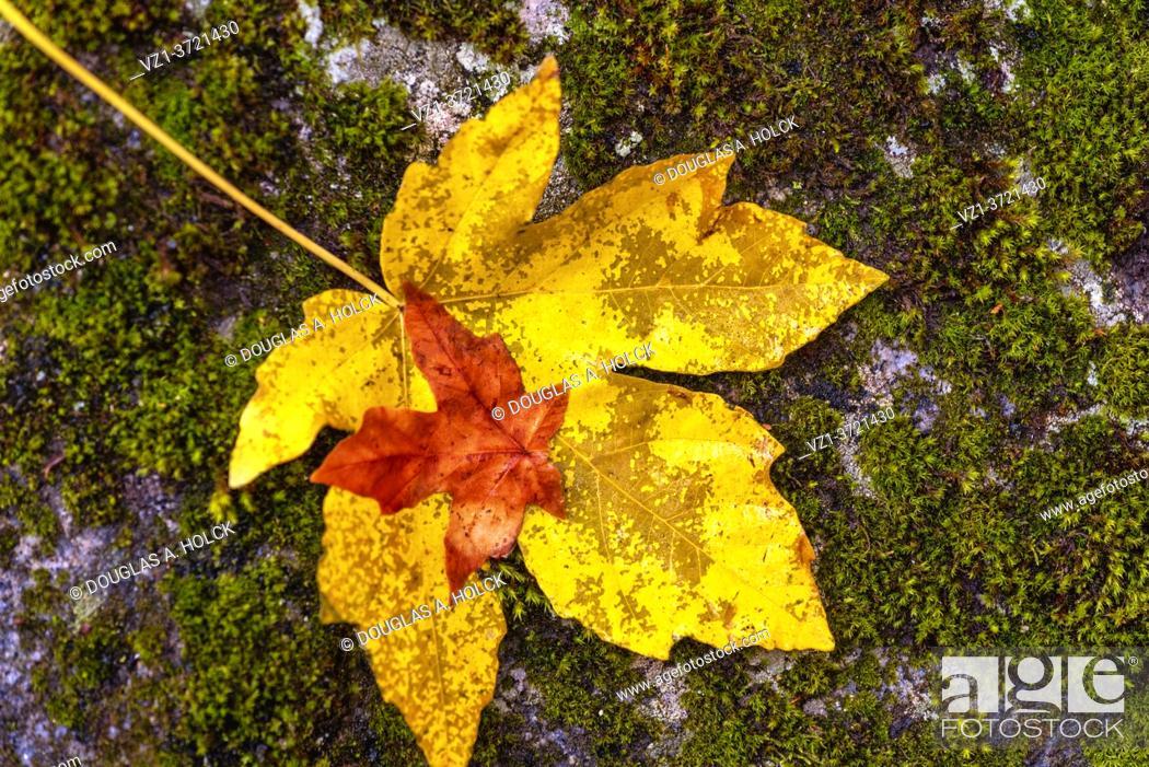 Stock Photo: Leaf upon a Leaf Yosemite National Park CA USA World Location.