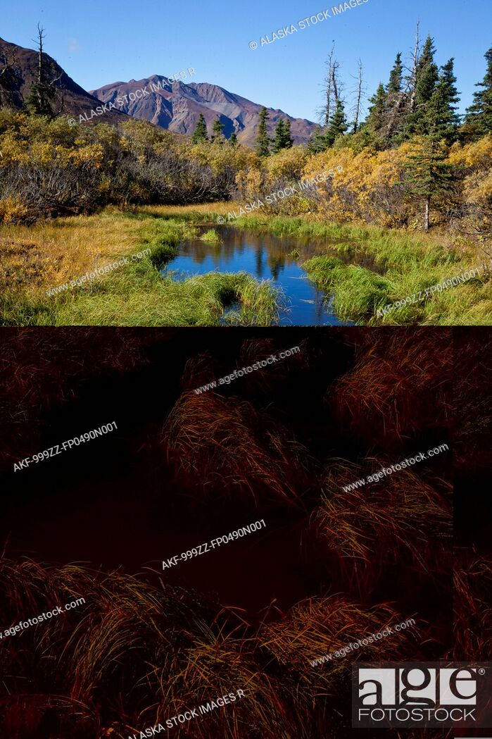 Stock Photo: Pond and wetland area near mile 50 of the park road in Denali National Park and Preserve, Interior Alaska, Autumn.