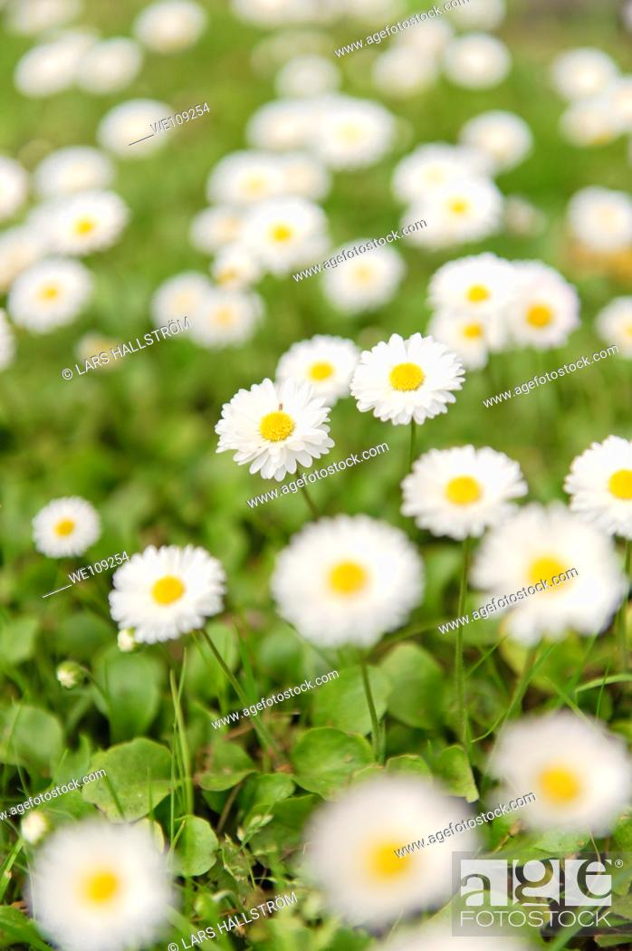 Stock Photo: Flowerbed with white flowers.