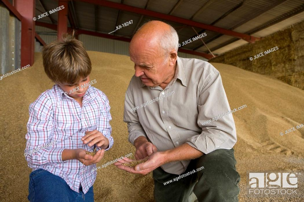 Stock Photo: Farmer and grandson looking at wheat grains.