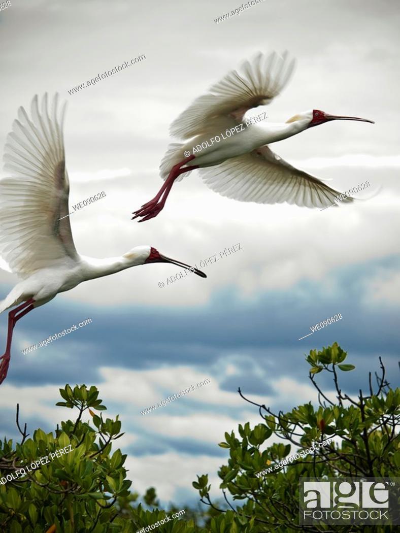 Stock Photo: Birds in Bird's Island, Ziguinchor, Senegal.