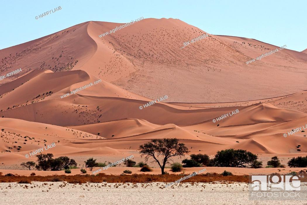 Imagen: Sand dunes, Camel thorn trees (Vachellia erioloba) at the front, Sossusvlei, Namib Desert, Namib-Naukluft National Park, Namibia.