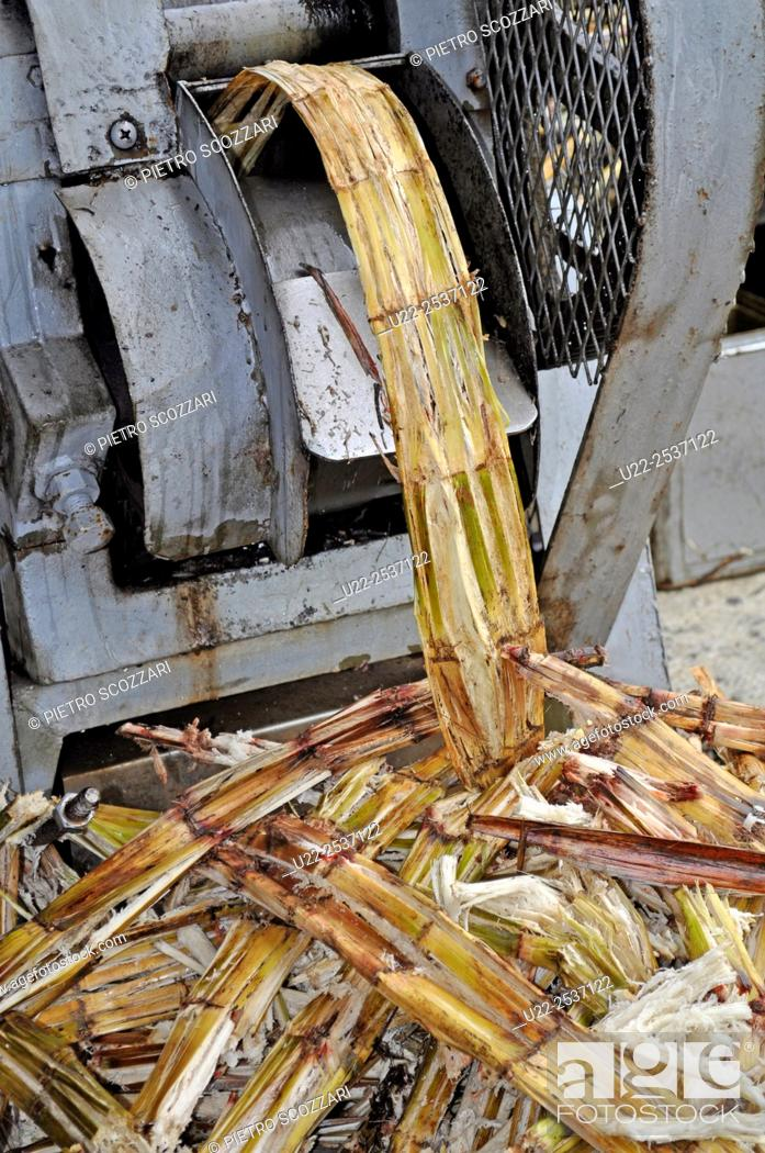 Stock Photo: Ishigaki, Okinawa, Japan: squeezing sugarcane to get the juice to make chinsuko cookies at Bussan Center.