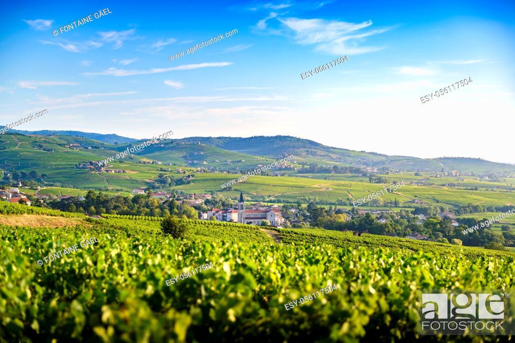 Stock Photo: Paysage et vignobles du Beaujolais, Fleurie Chiroubles et Villié-Morgon, France.