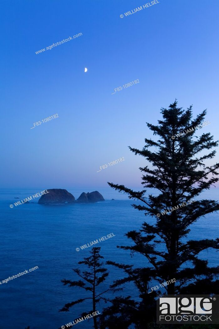 Stock Photo: USA, Oregon, Tillamook County, Cape Meares State Park, sea stacks in Pacific ocean off Cape Meares, sitka spruce trees Picea sitchensis, setting moon at dusk.