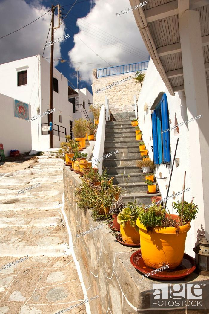 Stock Photo: Yellow flower pots in front of a house near the sea in Faros village, Sifnos, Cyclades Islands, Greek Islands, Greece, Europe.