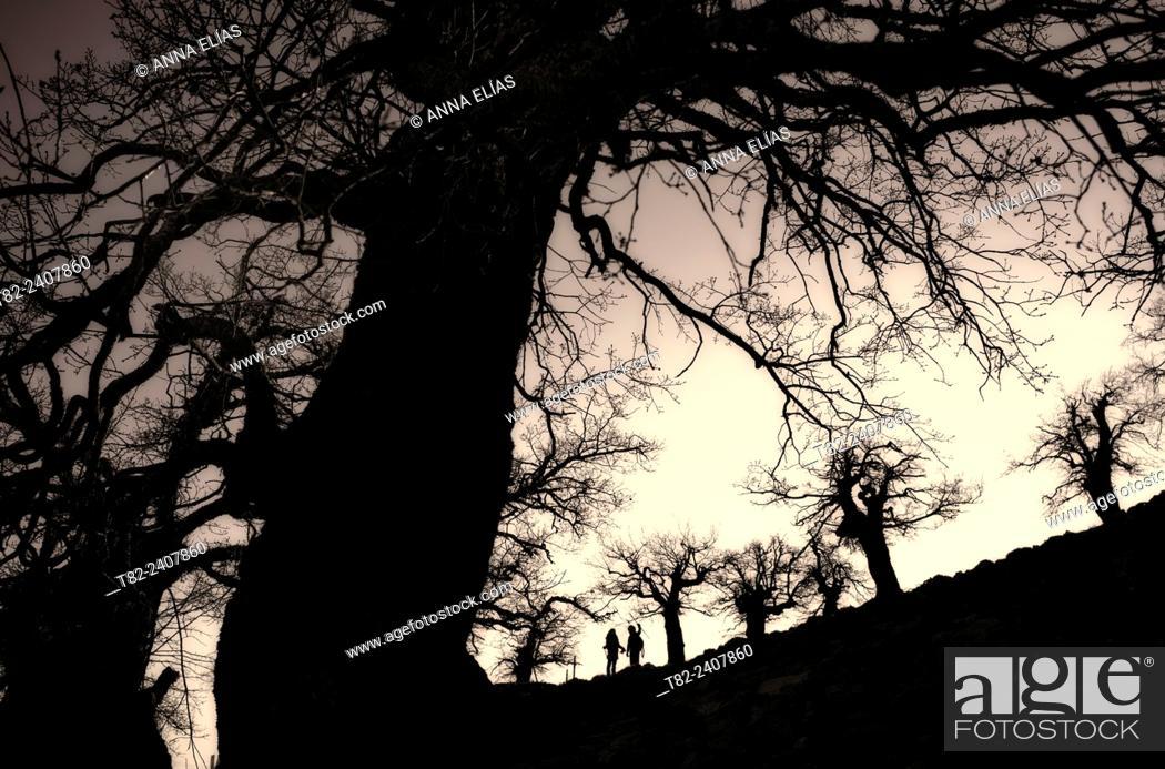 Stock Photo: backlit two walkers among trees Ronda, Malaga, Spain.