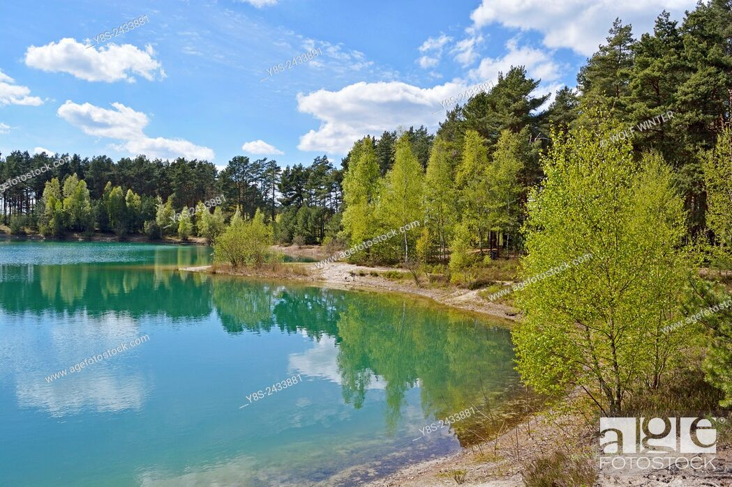 Stock Photo: Small Lake in Spring at Wilsche, Gifhorn, Lower Saxony, Germany.