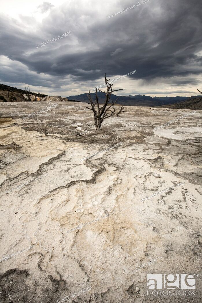 Stock Photo: Lone dead tree on dry terraces of travertine rock, under dark clouds in a mountainous landscape of Mammoth Hot Springs in a drought, Yellowstone National Park.
