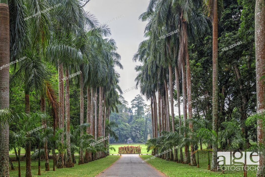 Stock Photo: Royal Botanical Gardens, Peradeniya, Kandy, Central Province, Sri Lanka, Asia.
