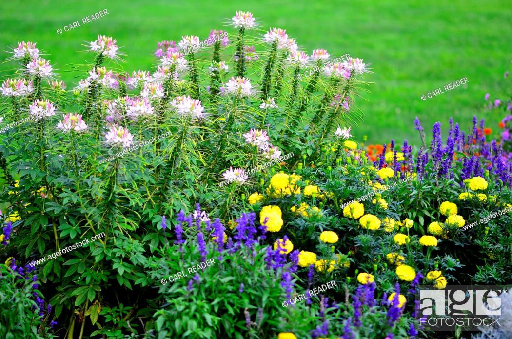Stock Photo: A soft-focus flower garden, Pennsylvania, USA.