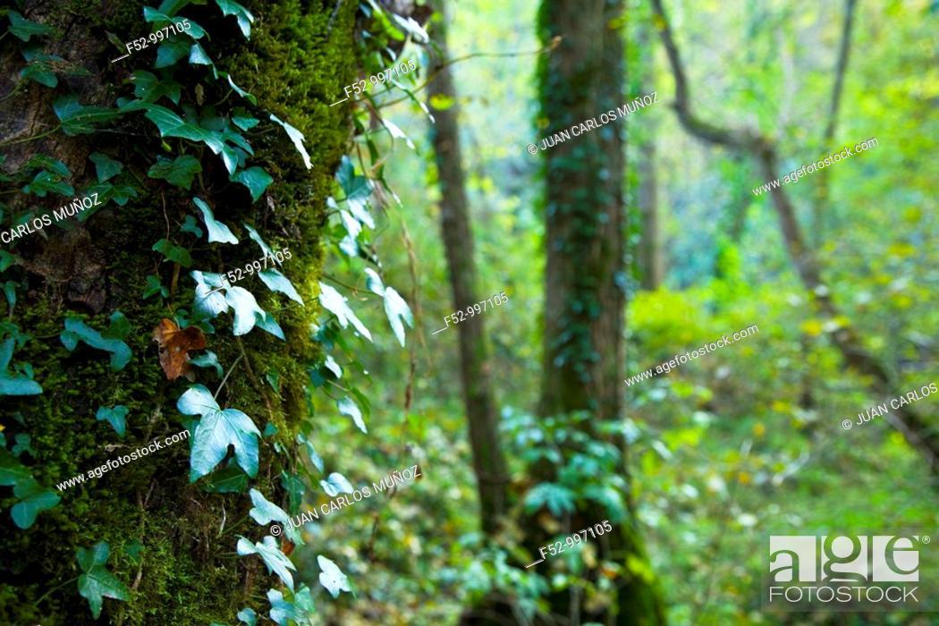 Stock Photo: Asón river bank. Upper reaches between Ramales and Arredondo. Cantabria. Spain.