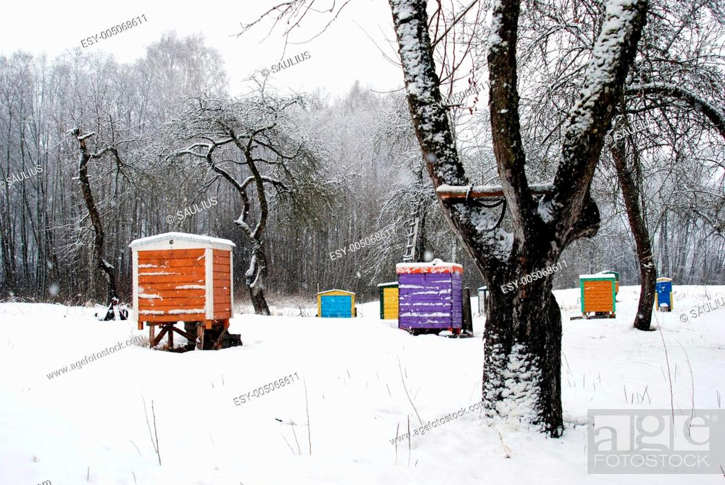 Stock Photo: Hives cover snow colorful bee house winter tree.