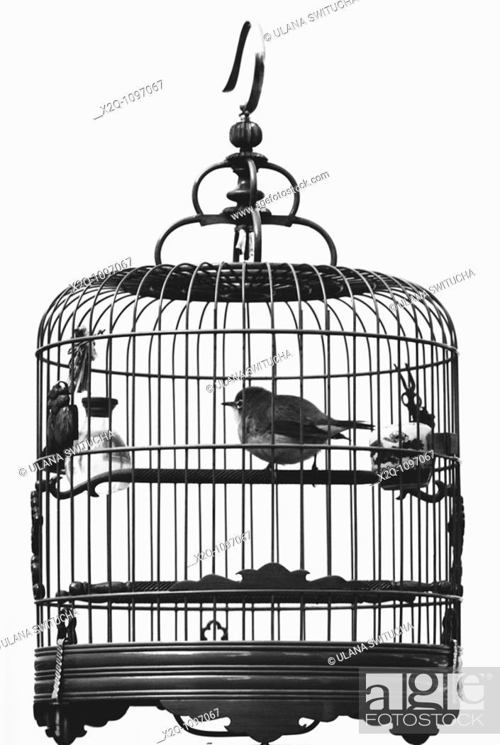 Stock Photo: A bird in a bamboo bird cage.