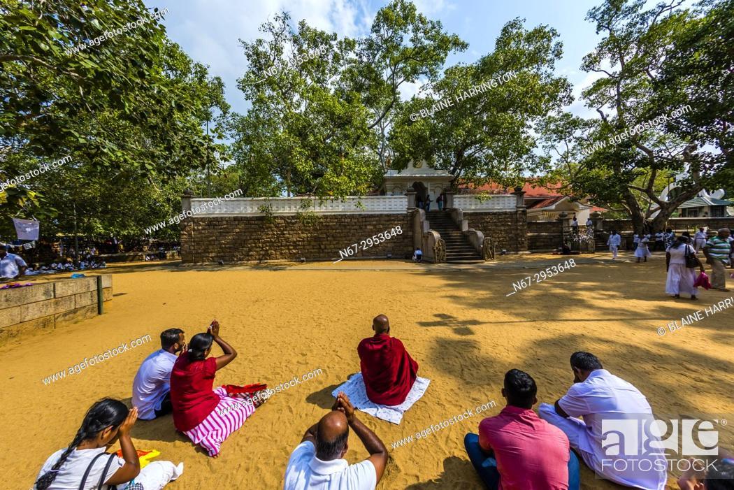 Photo de stock: Sri Maha Bodhi, the sacred bodhi tree. . Anuradhapura, North Central, Sri Lanka.
