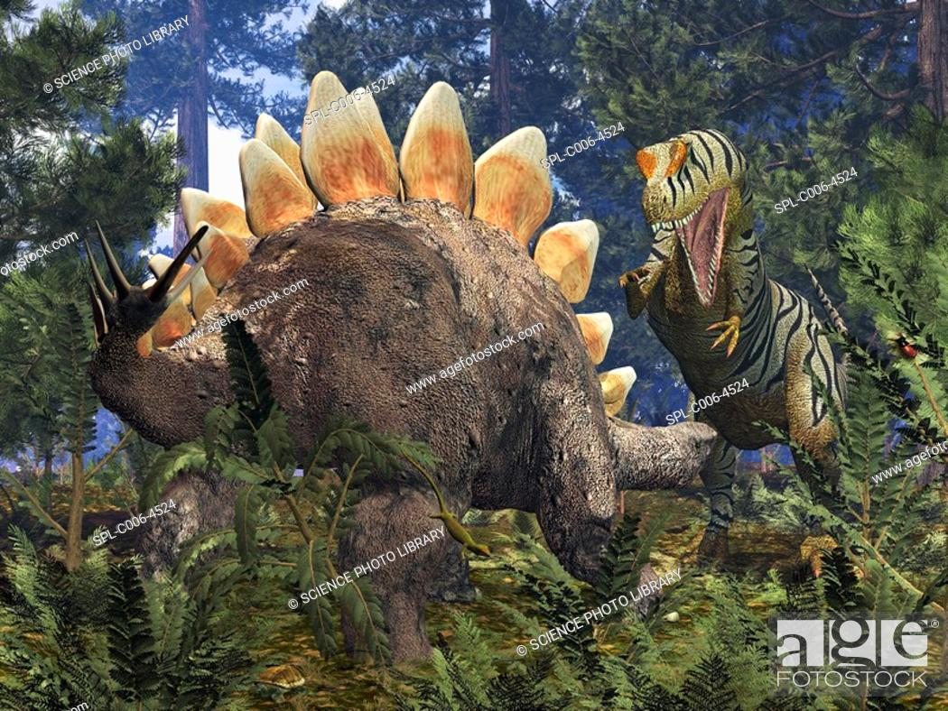 Stock Photo: Jurassic dinosaurs. Computer artwork of an Allosaurus right confronting a grazing Stegosaurus left in a Jurassic redwood forest.