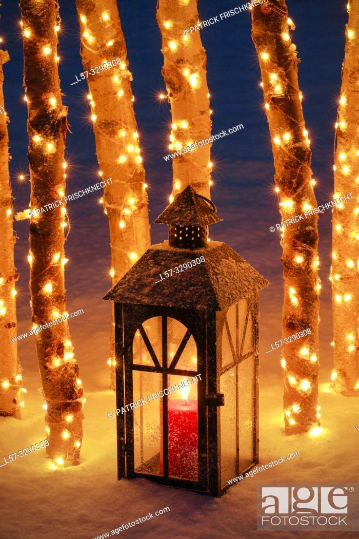 Stock Photo: lantern among birch tree trunks with christmas lights.