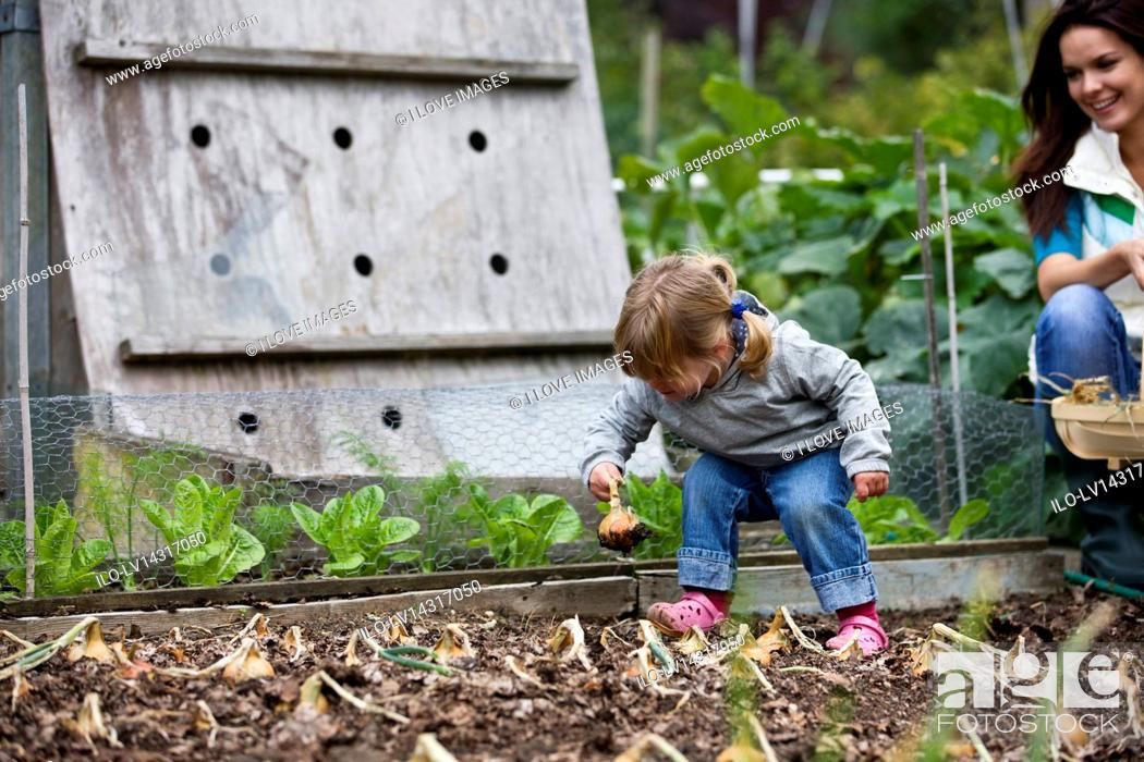 Stock Photo: A young girl pulling up onions on an allotment.