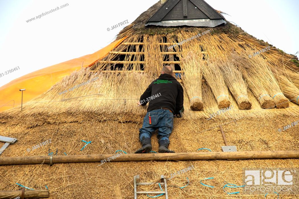 Stock Photo: reed worker preparing new roof with reed at old farm in Giethoorn, Holland.