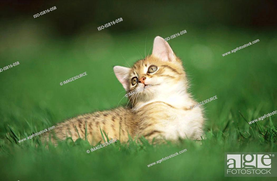 Stock Photo: Kitten resting on grass.