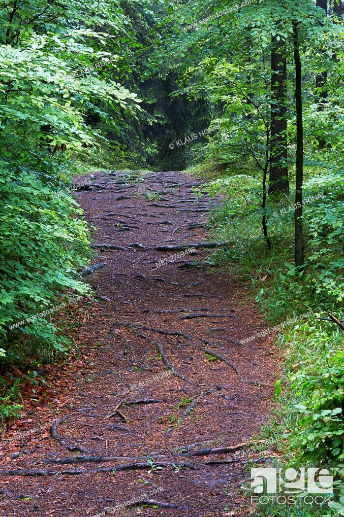 Stock Photo: Mixed forest after rain - Bavaria / Germany.