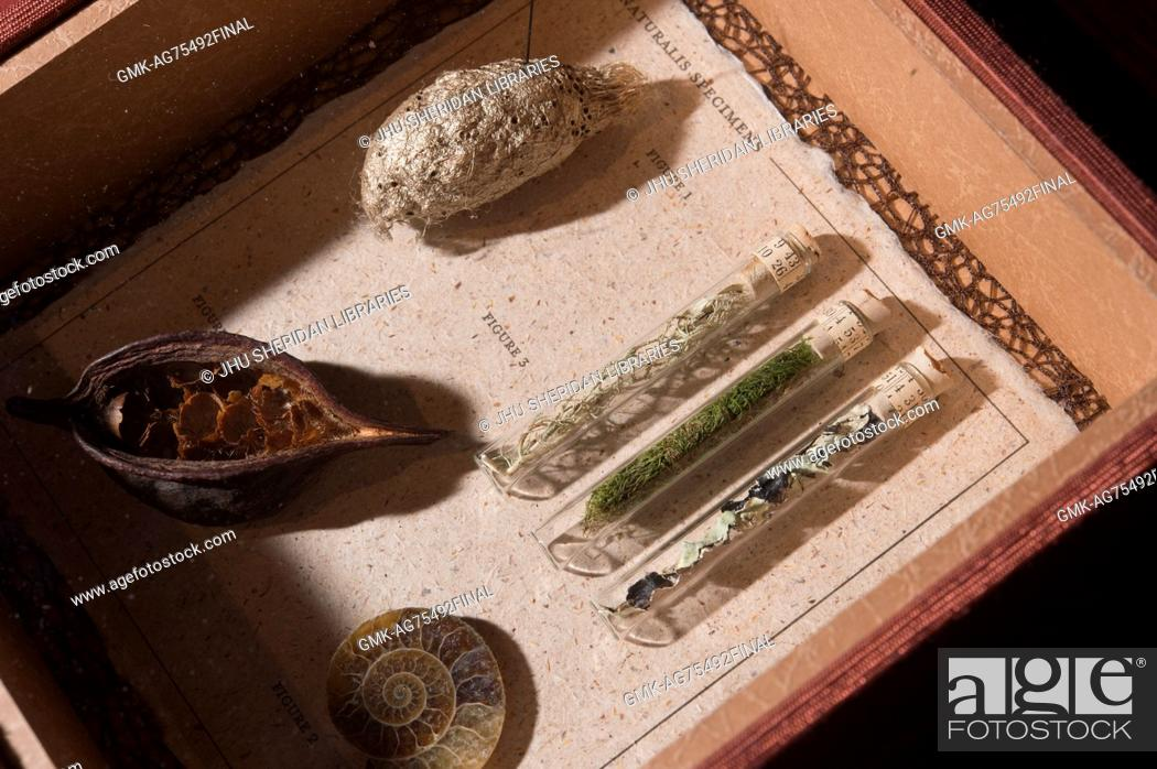 Imagen: Specimens from nature exposed and in test tubes under museum glass, part of 'Remnants', a letterpress edition of four short biographies of women naturalists.
