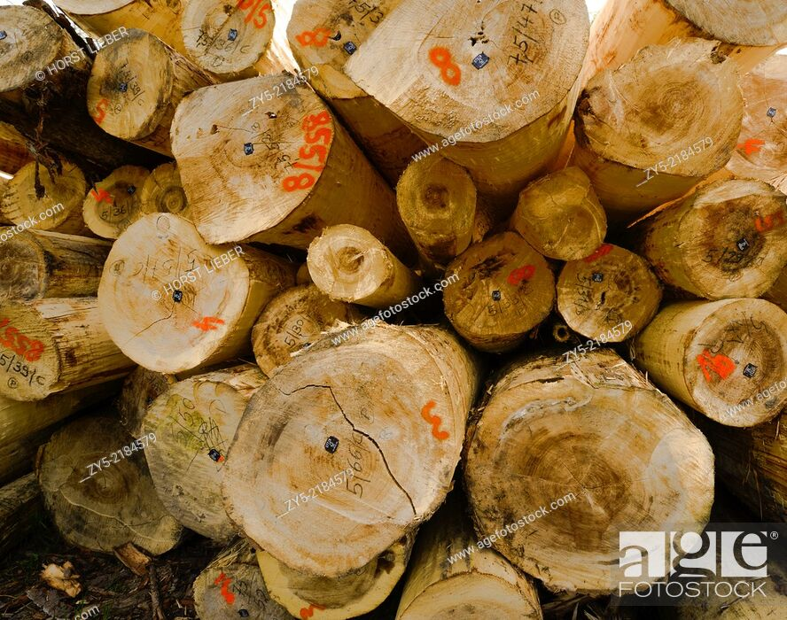 Imagen: Felled tree trunks in forest, Baden-Baden, Baden Wuerttemberg, Germany.