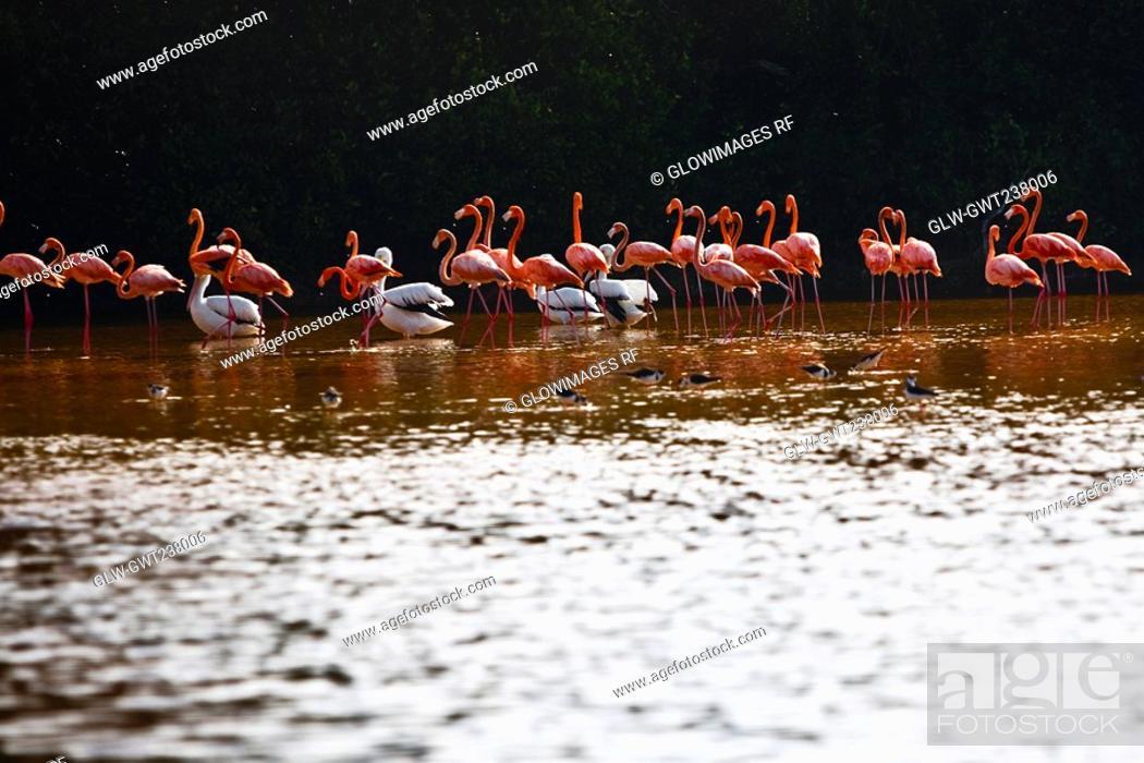 Stock Photo: Flock of Ria De Celestun birds in water, Yucatan, Mexico.