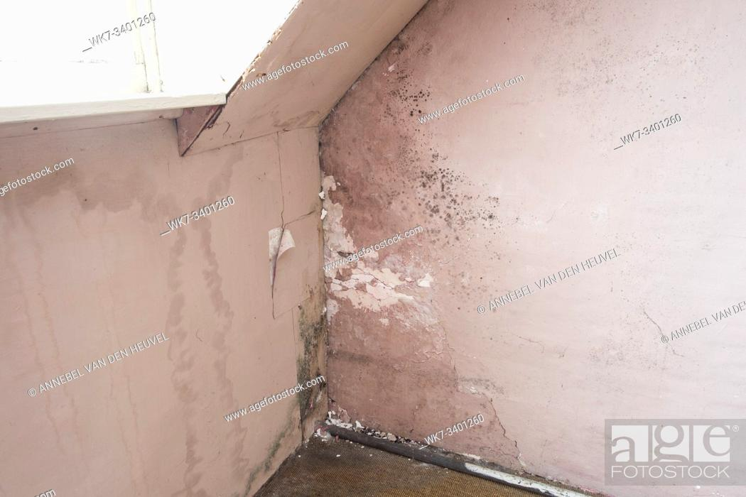 Stock Photo: Water damage causing mold growth on the interior walls of a property close-up.