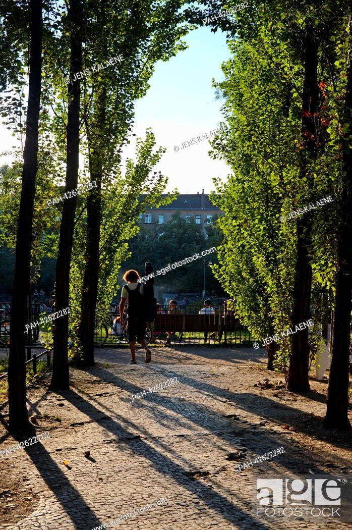 Stock Photo: Broad-leafed trees stand on Boxhagener Platz in the Friedrichshain district in Berlin, Germany, 7 September 2013. Photo: Jens Kalaene | usage worldwide.