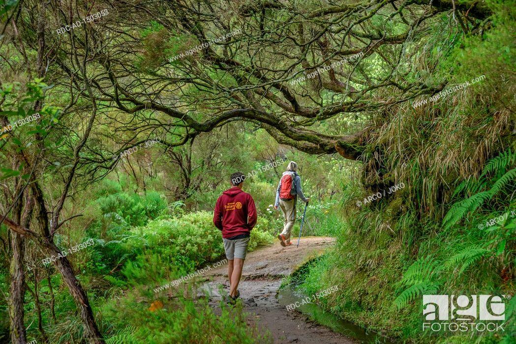 Stock Photo: Wanderweg, Rabacal-Tal, Zentralgebirge, Madeira, Portugal.
