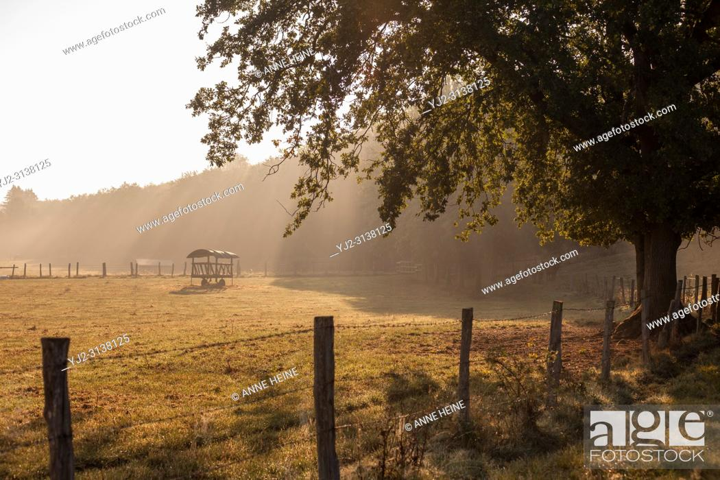 Stock Photo: Pasture in the Möhne valley. Belecke, Sauerland, Arnsberger Wald, Germany.