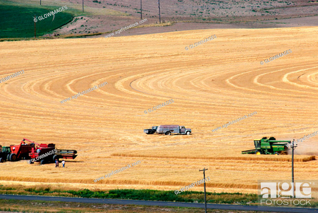 Stock Photo: Custom harvest crew with combines in wheat field, Cheyenne, WY.