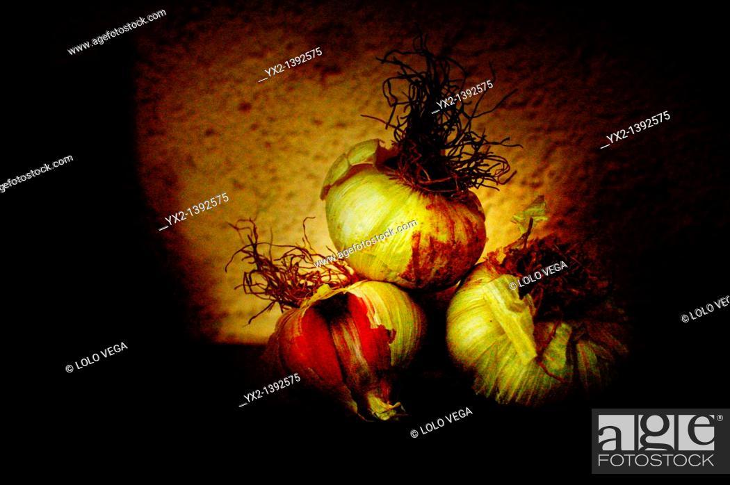 Stock Photo: Color tavern heads of garlic.