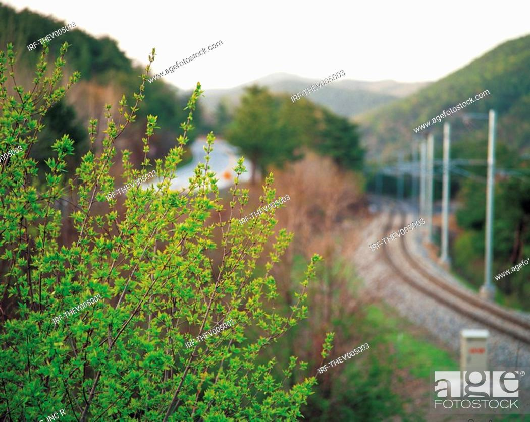 Stock Photo: rail track and plant.