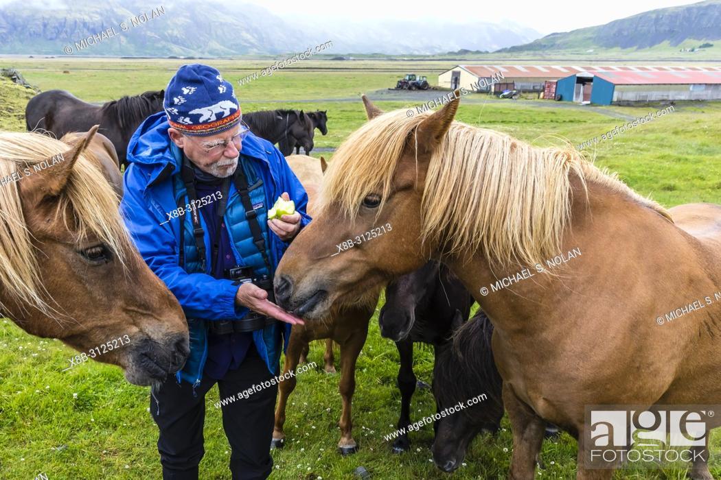 Imagen: Feeding an Icelandic horse an apple on a farm on the southeast coast of Iceland.