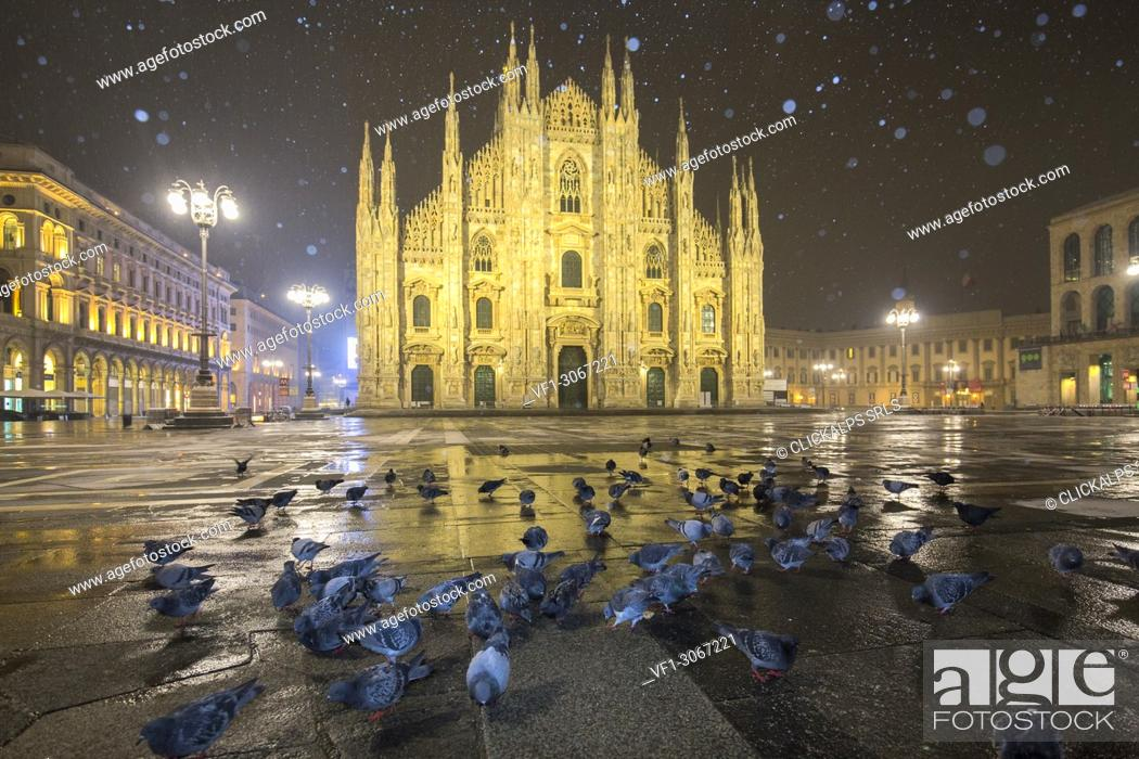 Stock Photo: Pigeons in Piazza Duomo during a night snowfall. Milan, Lombardy, Northern Italy, Italy.