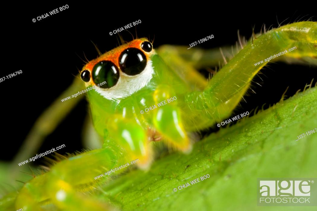 Stock Photo: Jumping spider.