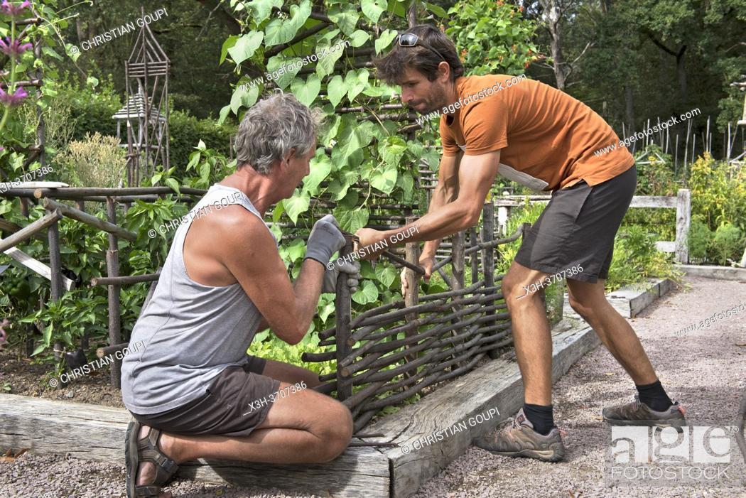 Stock Photo: Demonstration de clayonnage par les jardiniers des Jardins du Prieure Notre-Dame d'Orsan, departement du Cher, Province historique du Berry.