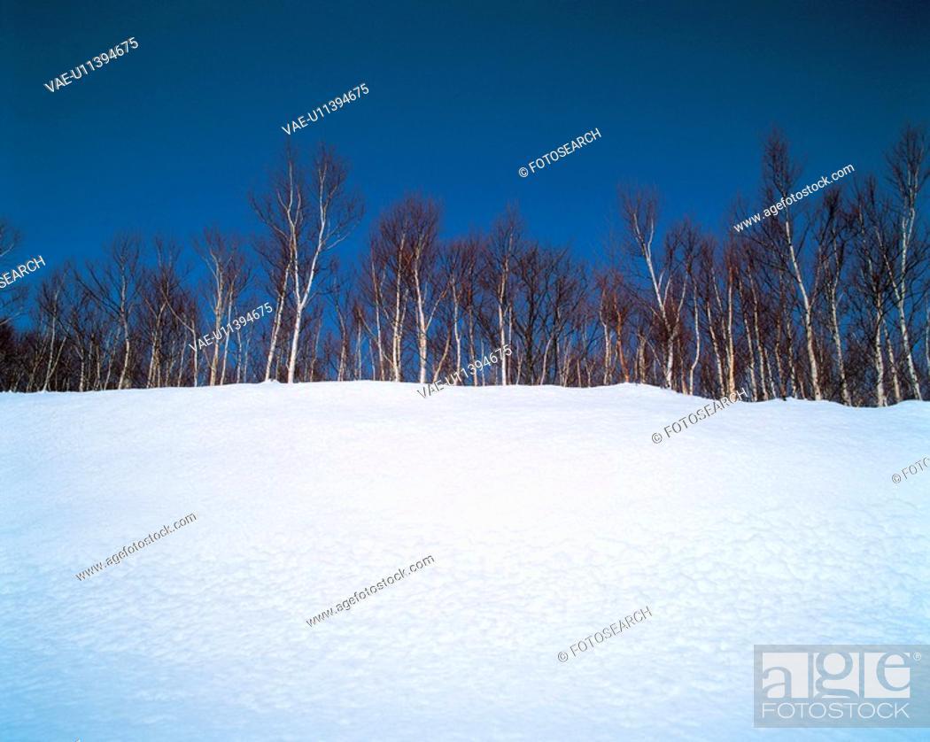 Stock Photo: hill, landscape, winter, snowscape, snow, tree, nature.